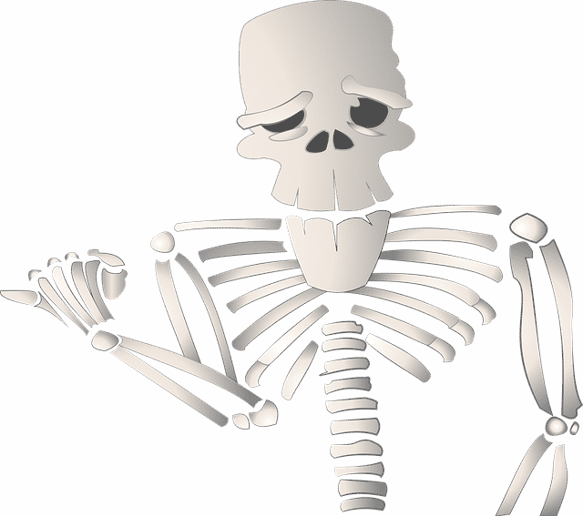 Names of Bones
