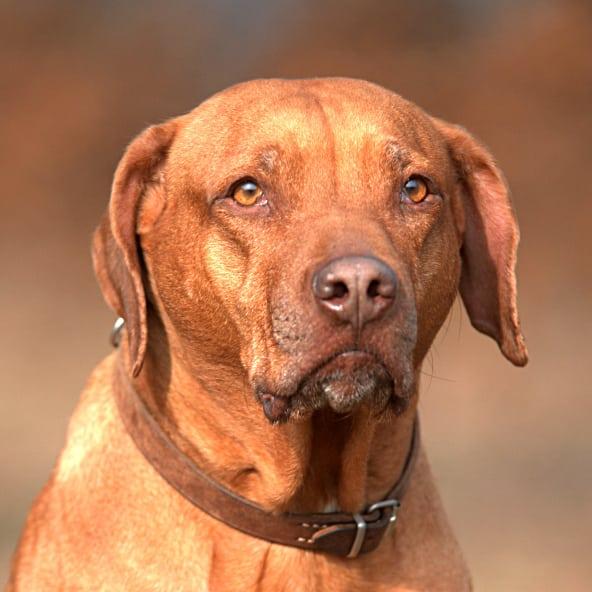 Dog breeds quiz